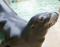 sea lion 300x200 300x200 2